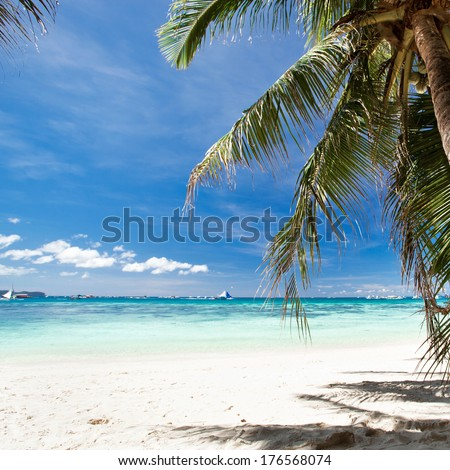Beautiful palm on beach with white sand, tropical nature - stock photo