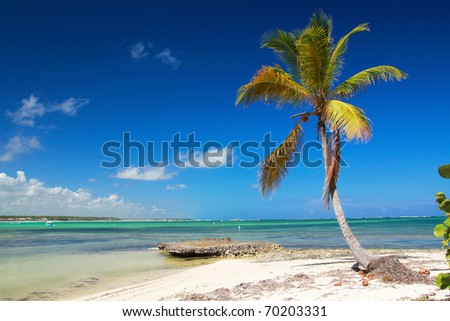 Beautiful palm on caribbean beach