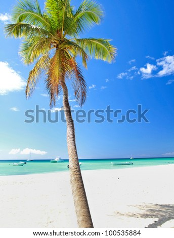 Beautiful palm on caribbean beach on Saona island - stock photo