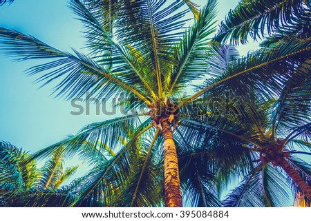 Beautiful palm tree on blue sky - Vintage Filter