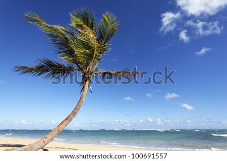 beautiful palm tree on caribbean beach in summer
