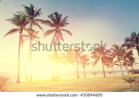 Beautiful palm trees at the beach Indian ocean - stock photo