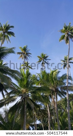 beautiful palm trees in jungle