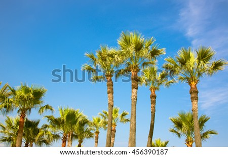 Beautiful palm trees on blue sky background, Cote d'azur