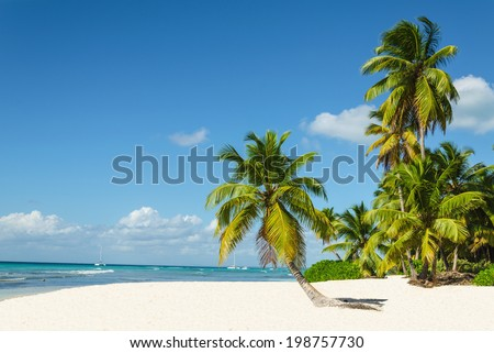 Beautiful palm trees on sandy beach - stock photo