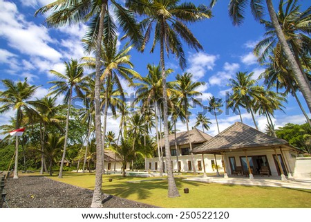 Beautiful Palm Trees on the Tropical Island. - stock photo
