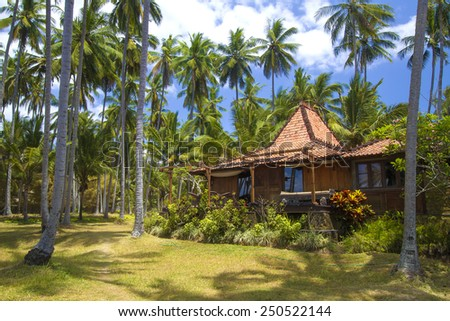 Beautiful Palm Trees on the Tropical Island. - stock photo