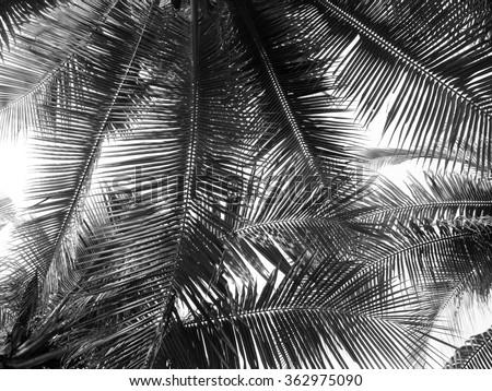 beautiful palms leaf on white background - stock photo