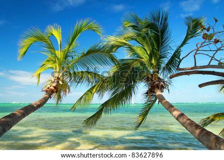 Beautiful palms on tropical beach, caribbean sea - stock photo