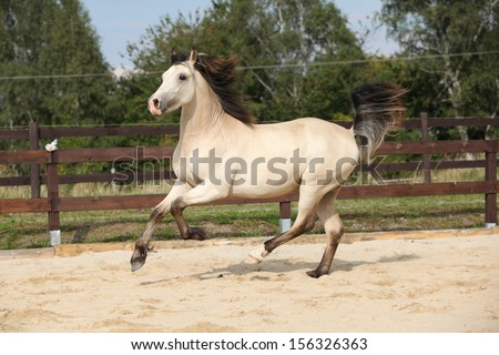 Beautiful palomino horse running on the sand