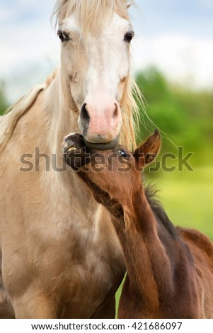 Beautiful palomino horse with colt portrait at summer day