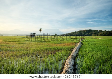 Beautiful panoramic in the morning at paddy field, reflections old hut with trees.  Image has grain or blurry or noise and soft focus when view at full resolution.  (Shallow DOF, slight motion blur) - stock photo