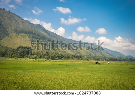 Beautiful panoramic landscapes with rice plantations in Samosir Island, Lake Toba, North Sumatra. Indonesia