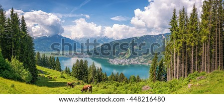 Beautiful panoramic view of cow grazing in fresh green meadows in the Alps with famous city of Zell am See and idyllic Zeller Lake on a sunny day in spring in Salzburg, Salzburger Land, Austria - stock photo