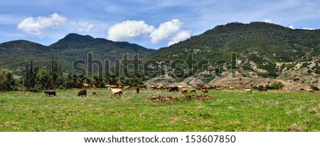 Beautiful panoramic view of green mountains with sheep grazing in a valley in the state of Oaxaca Mexico. - stock photo