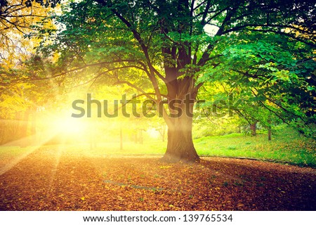 Beautiful park - stock photo