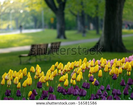 Beautiful park in spring, tulips in foreground - stock photo