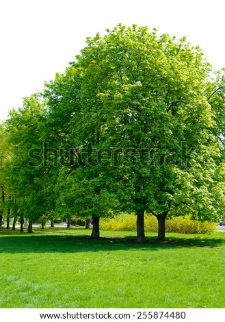 Beautiful Park with Fresh Green Lawn and Lush Trees - stock photo
