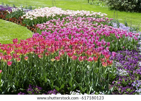 Beautiful park with spring flowers on the island of flowers Reichenau, Lake Constance, Baden-Wurttemberg, Germany, Europe, 06. May 2008