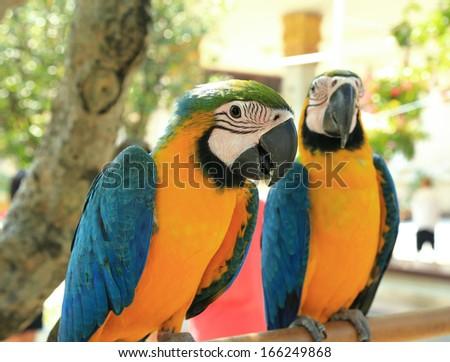beautiful parrot birds - stock photo