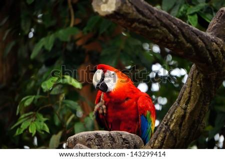 Beautiful parrots - stock photo