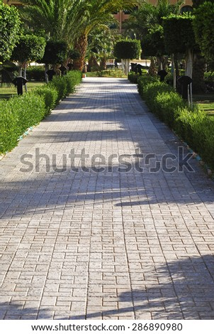 Beautiful path in the park, palms, trees, bushes