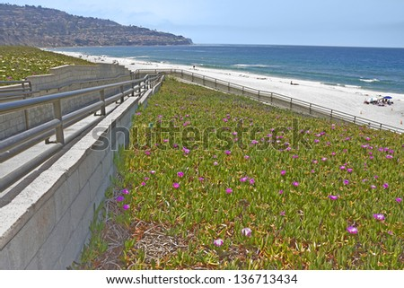 Beautiful path to the beach. Paved ramp with metal handrail leads down to the shoreline surrounded by blooming ice plant with purple flowers. Hill, blue sky in the background. - stock photo