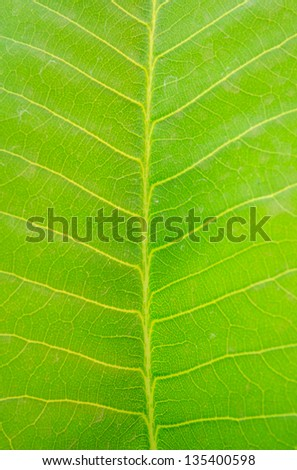 Beautiful pattern in green leaf - stock photo