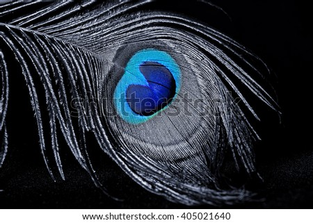 Beautiful peacock feather on black background. - stock photo