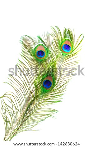 beautiful peacock feathers