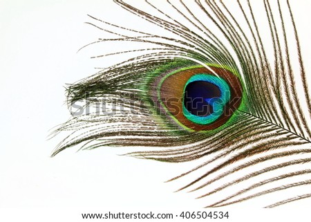 Beautiful peacock feathers on white background - stock photo