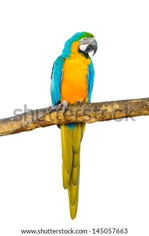 Beautiful Pet Parrot