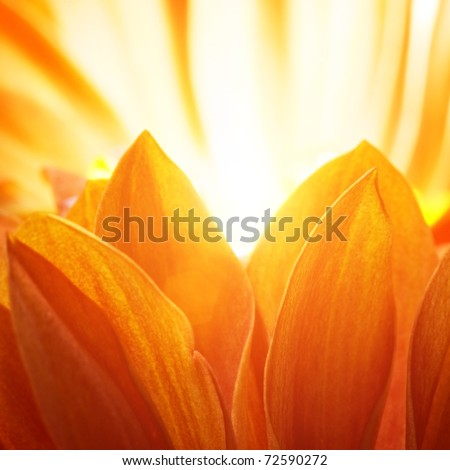 Beautiful petals of an orange flower