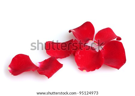 beautiful petals of red roses isolated on white - stock photo