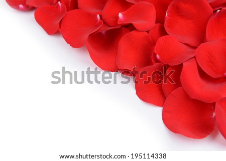 Beautiful petals of red roses on white background - stock photo