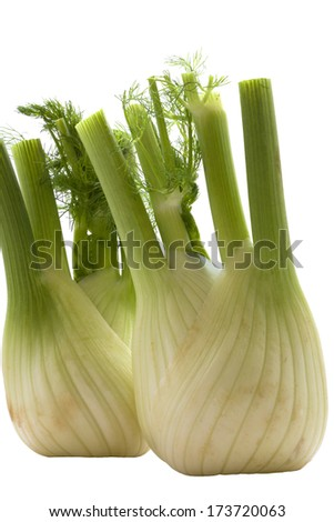 Beautiful photo fresh, organic fennel on a white background .