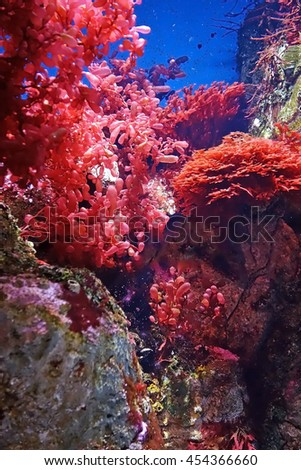 Beautiful photograph of colorful corals and red algae aquatic plants in the Lisbon Oceanarium, Portugal. Wild nature background. - stock photo