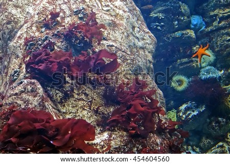 Beautiful photograph of underwater colorful corals, algae aquatic plants, starfish and actinia equina in the Lisbon Oceanarium, Portugal. Wild nature background. The underwater world. Sea anemone. - stock photo