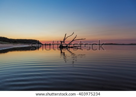 Beautiful piece of driftwood reflecting in the water  at sunrise. Snowy River mouth, Victoria, Australia - stock photo