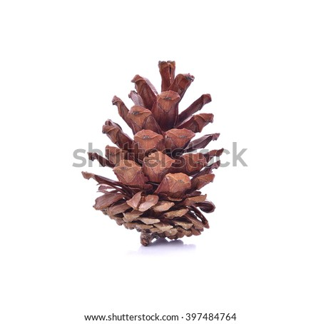 Beautiful pine cone isolated on white background