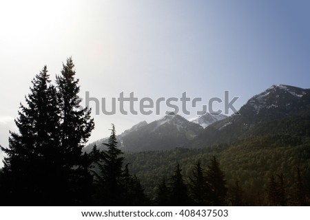 Beautiful pine trees on background high mountains and cloud blue sky