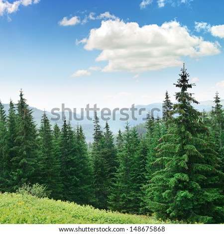 Beautiful pine trees on background high mountains. Carpathians                               - stock photo
