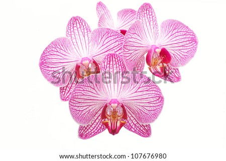 beautiful pink and white orchid on towel - stock photo