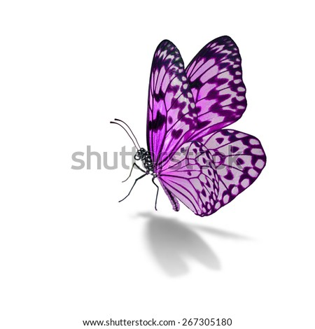 Beautiful pink butterfly isolated on white background - stock photo