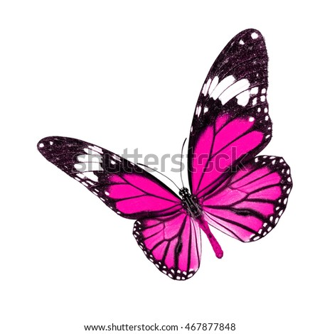 Beautiful Pink butterfly upper wing profile isolated on white background.