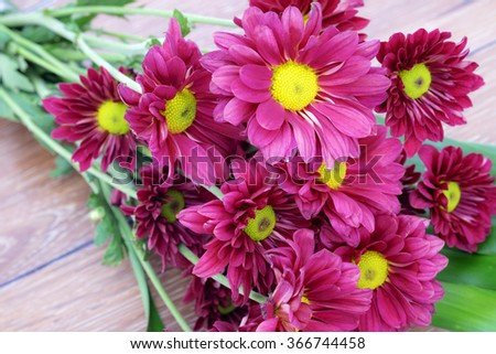 Beautiful Pink Chrysanthemum flower with vintage filter style - stock photo