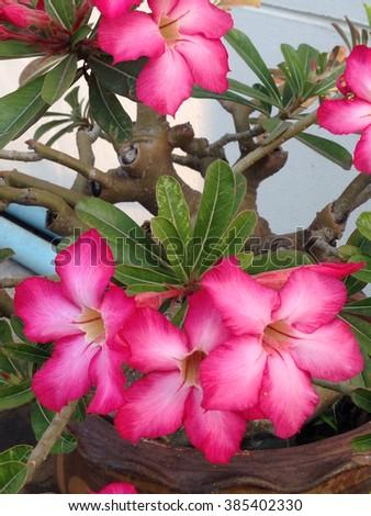 beautiful pink flower - stock photo