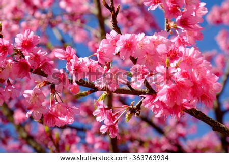 Beautiful pink flower blossom