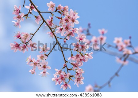 Beautiful pink flower blossom - stock photo