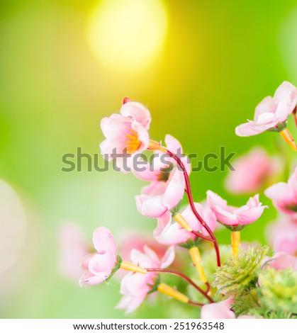 Beautiful pink flower close up. Vintage light effect. - stock photo
